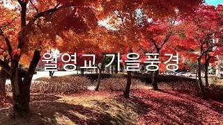 안동댐 월영교 월영공원…