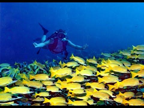 Diving in Maldive Island