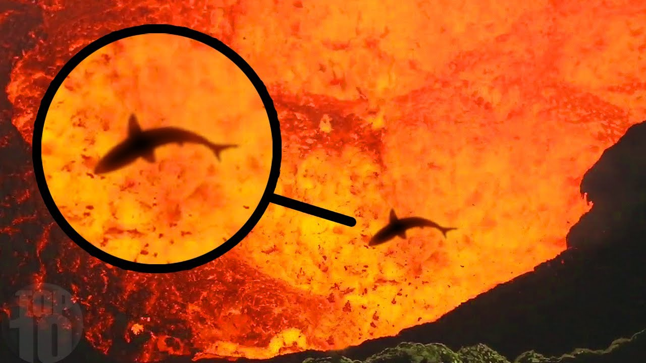 10 Scary Animals That Live In Volcanos