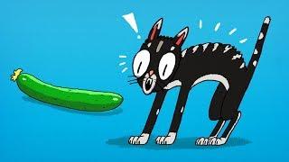 A Razão Nada Divertida  para os Gatos Odiarem Pepinos