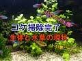 アクアリウム【熱帯魚45㌢】コケ掃除後の水槽、生体、水草の話