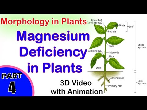 Magnesium Deficiency In Plants   Absorption Of Light During Photosynthesis   Class 11th Biology