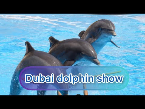 Dubai Dolphin Show at Dubai Dolphinarium #dolphinarium#dolphinshow