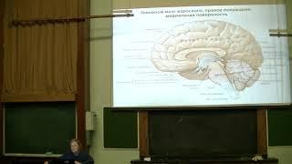 Математические модели в биологии - лекция 10