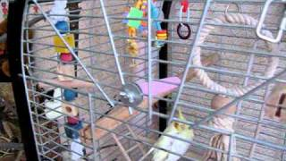 клетка Fop Liana для средних и крупных попугаев