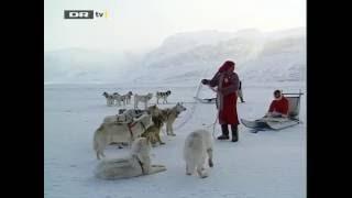 Nissebanden i Grønland 7