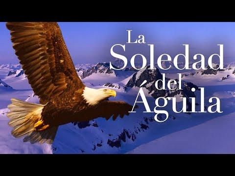 la-soledad-del-águila