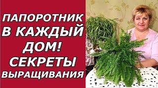 видео Выращивание папоротника