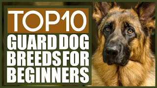 The Best GUARD DOG BREEDS FOR FIRST TIME OWNERS!