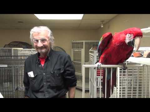Adopting a Green-Winged Macaw from Lazicki's Bird Rescue