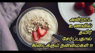 Benefits of Curd in Tamil | Curd - Thayir | Eating Curd (Yogurt) | Healthy Life - Tamil.