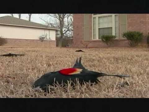 Thousands Of Dead Birds And Fish Mystery In Arkansas