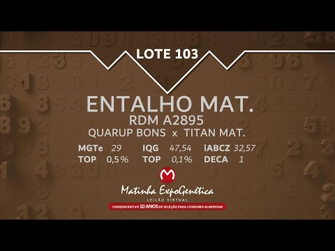 LOTE 103 MATINHA EXPOGENÉTICA 2021