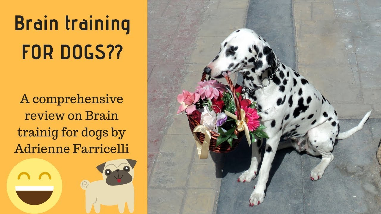 Brain Training 4 Dogs Unlimited Annual Promo Code