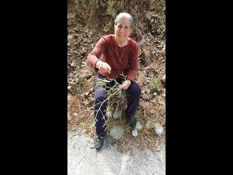 Μαζεύοντας σπαράγγια στο φαράγγι Ρίχτης