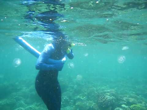 Moon jelly jellyfish mass snorkellers snorkeling great for What saltwater fish are in season now