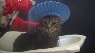 Коты в ванной