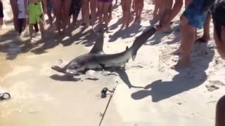 Смелый рыбак вытащил акулу на пляж-Bold fisherman pulled the shark to the beach