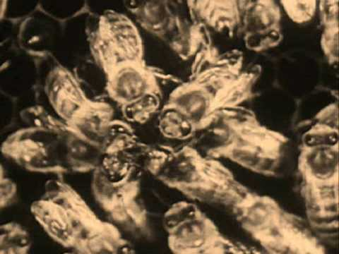 "Controlled Bleeding ""Bees (Parts 1 - 6)"" Video"