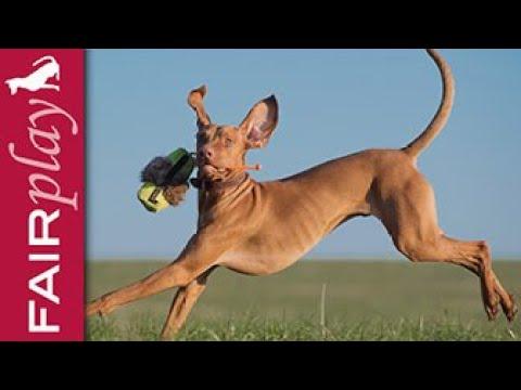 Suchbegriff Hundeschule Lustig Geschenke Online Bestellen