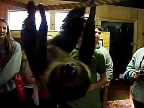 Sloth Attack! - YouTube