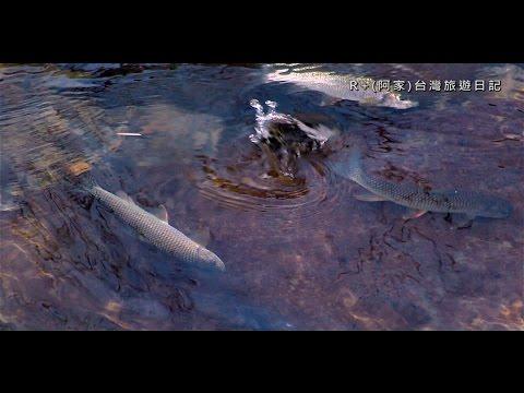 蓬萊溪賞魚步道和仙山 Penglai river Fish Watching P