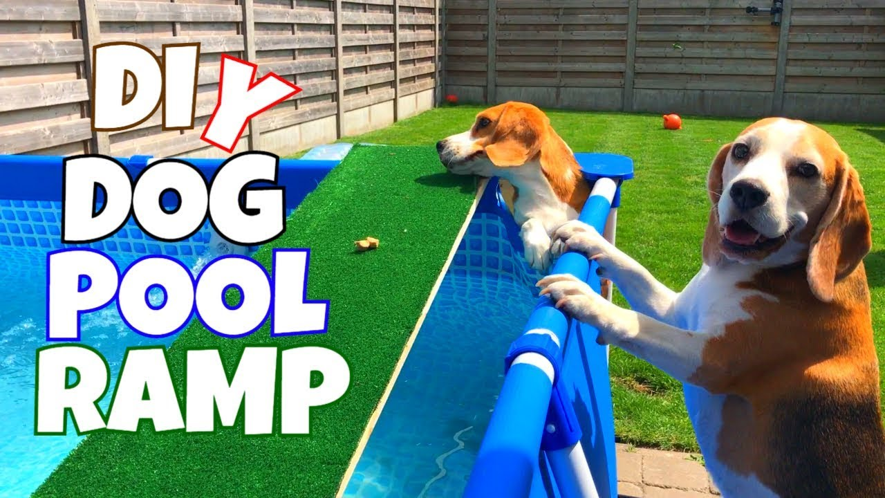 Diy Dog Pool Ramp Cute And Funny Beagle Dogs Youtube