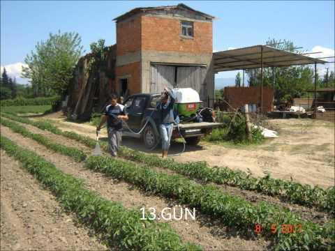 açık tarla domates yetiştiriciliğinde roa.wmv