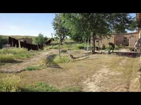 Uzbekistan countryside (Close to Samarkand)