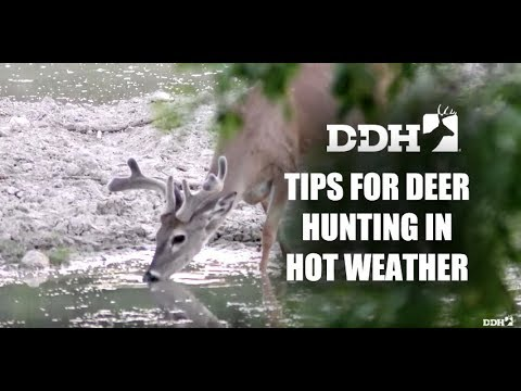 Proven Tips For Deer Hunting In Hot Weather Deer Talk Now