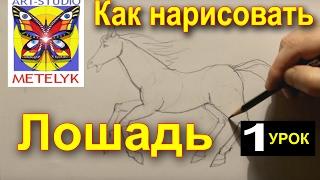 Как нарисовать лошадь. Урок 1.