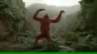 Прикол с обезьяной зажигай в субботу