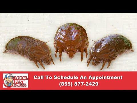 Portland Bed Bug Exterminator | Portland Bed Bug Inspection | Portland Bed Bug Pest Control