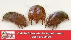 Portland Bed Bug Exterminator   Portland Bed Bug Inspection   Portland Bed Bug Pest Control