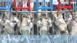 3000 6000bph Halal Poultry Processing Plant 2014
