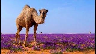 Atmosphere Compresses & Deserts Bloom as Both Hemispheres Break Record Cold (753)