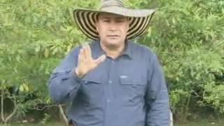 CONTROL DE MOKO EN PLATANO COLOMBIA