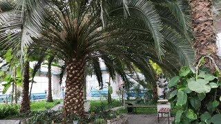 Зимний сад в Темиртау часть 2 Интервью и прогулка по зимнему саду