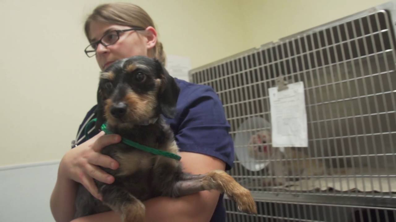 Cruelty and Rescue - Houston SPCA
