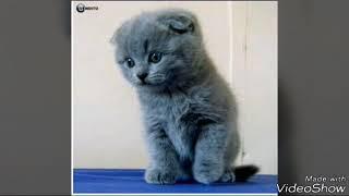 Вислоухие котята и Информация!