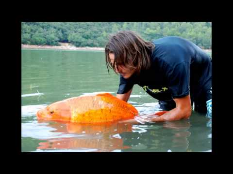 Most Famous Giant Goldfish In The World - Raphaël Biagini.