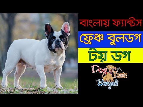 French Bulldog facts in bengali | Dog breed French Bulldog | Dog Facts Bengali