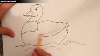 Como dibujar un pato paso a paso