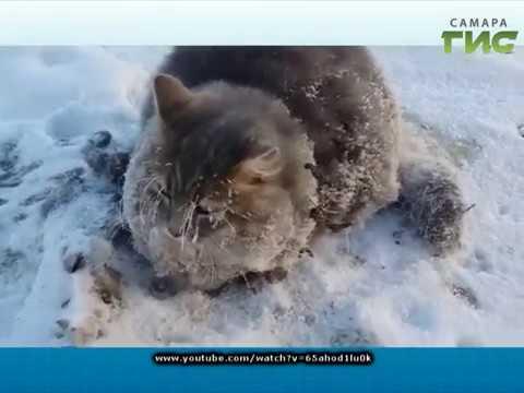 Спасение примерзшего кота. -