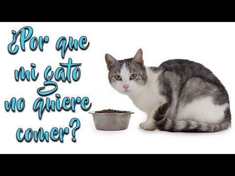 ¿Porque mi gato no quiere comer?