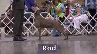 Rod Bif Gch Silhouette's All Revved Up