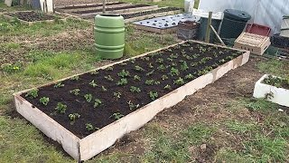 Ep23: New strawberry bed ALLOTMENT GARDEN HAPPINESS