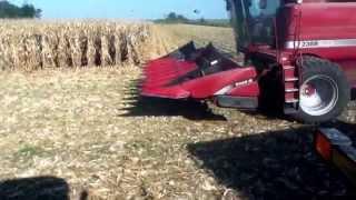 case ih 2388 harvesting corn