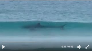 CAPE TOWN: SHARK IN THE WATER AT STRANDFONTEIN CAPTURED ON CAMERA