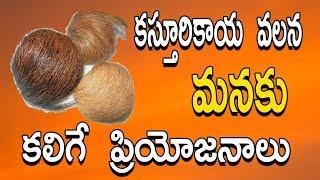 కస్తూరి కాయ వలన మనకు కలిగే  ప్రయోజనాలు Importance Of Kasturi Kaya & Benefits | 1